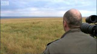 Download Simba Under Attack | Big Cat Diary | BBC Earth Video