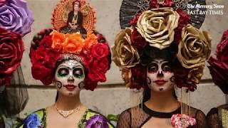 Download Escape into The World of Frida Video