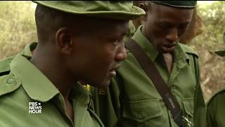 Download How lessons from fighting terrorism are saving elephants in Kenya Video