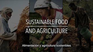 Download FAO Serie sobre políticas: Alimentación y agricultura sostenibles (con subtítulos) Video