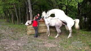 Download Pur sang arabe endurance vaucluse Video
