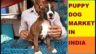 Download PUPPY DOG MARKET IN INDIA PART # 1 Video