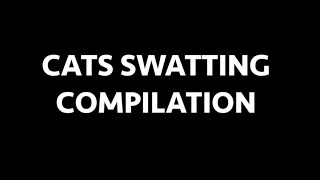 Download Cats Swatting Compilation - Cats Attacking And Smacking Things Video