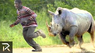 Download 10 Crazy Animal Safari Incidents! Video