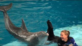 Download Dolphin Show at the National Aquarium Video