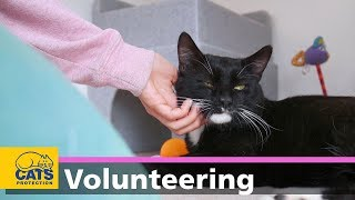 Download Volunteering with Cats Protection Video