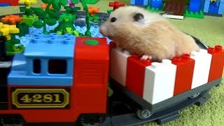 Download Tiny Hamster Playing on the Lego Playground Video