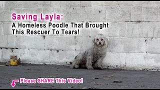 Download This Rescuer Was Brought To Tears When A Homeless Poodle Did The Sweetest Thing! Please Share! Video