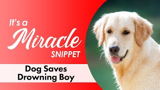 Download Dog Saves Drowning Boy - It's a Miracle - 6033 Video