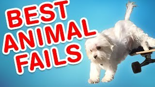 Download Best Animal Fails | Funny Fail Compilation Video