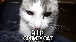 Download R. I. P. Grumpy Cat - We'll never forget you. Video
