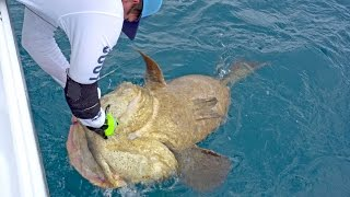 Download Fishing for Goliath Groupers with the Fish Bums - VLOG #10 Video