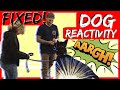 Download Aggressive German Shepherd attacks trainer during aggressive behavior training part 2 Video