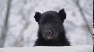Download Straßenhunde in Moskau Video