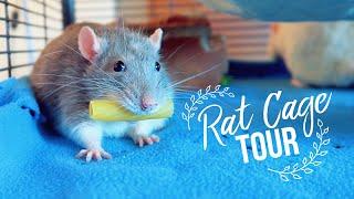 Download RAT CAGE TOUR 🐀 Video