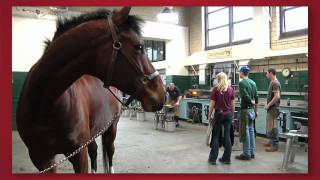Download Forward thinking: Cornell Veterinary Medicine Video