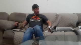 Download GM TYR - Fox & Hound P4 Video