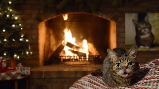 Download Lil BUB's Magical Yule LOG Video 2016 Video