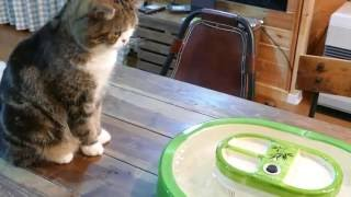 Download 流しそうめんとねこ。-Flowing noodles and Maru.- Video