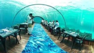 Download 360 Video Hurawalhi Maldives Underwater Restaurant Video