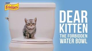 Download Dear Kitten: The Forbidden Water Bowl Video