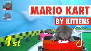 Download Mario Kart (By Kittens!) || Mario Kat Video