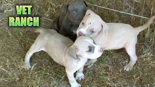 Download Newborn Puppies Abandoned at Shelter Video