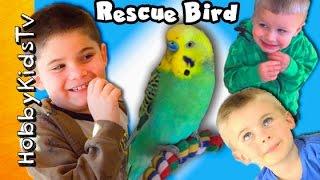 Download New HobbyBird! HobbyKids Meet Rescue Bird + Need Your Help Naming Him HobbyKidsTV Video