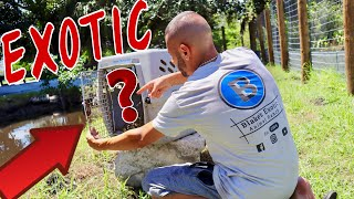 Download NEW EXOTIC ANIMALS ON THE RANCH *WHAT IS IT?!* Video