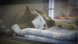 Download Calgary Dog Cat Shelter ~ Calgary Humane Society Video - non-profit animals pet adoption Video