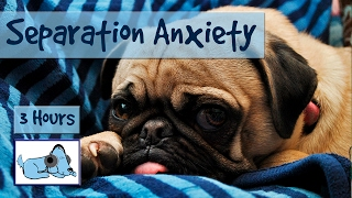 Download Over THREE Hours of Relaxation for Dogs with Separation Anxiety! Calm Your Dog While You're Away Video