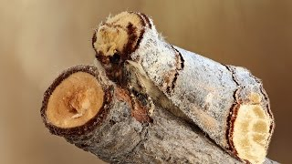 Download 12 Coolest Camouflage Animals and Insects Video