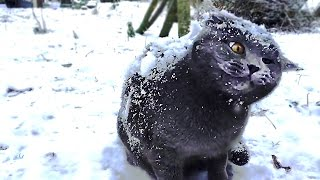 Download Cats in snow compilation Video