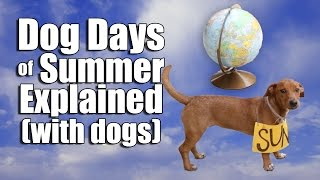 Download Dog Days of Summer Explained (with dogs) Video
