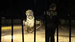 Download Cirque le dressage (La Piste aux étoiles) Video