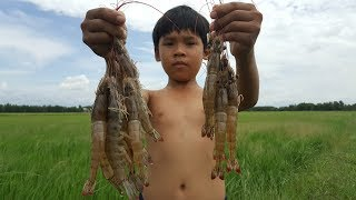 Download Freshwater Prawn Trap - Shrimp Trap Fishing Video