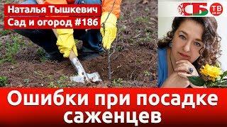 Download Посадка саженцев осенью без ошибки Video