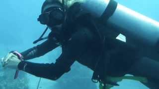 Download Trésor au Bahamas - palier - Video