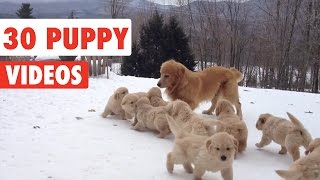 Download 30 Puppy Videos Compilation 2016 Video
