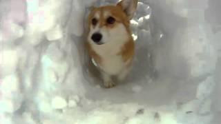 Download Corgi Snow Tunnel Video