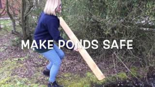 Download Help a hedgehog in your garden! Video