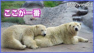 Download 微笑ましい午後の風景 ホッキョクグマ親子 Polar Bear ″Lara&Lila″ play,nursing,nap Video
