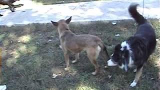 Download A quick dog park reprimand/correction Video