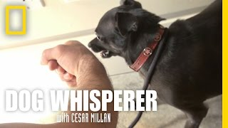 Download Confronting Richard | Dog Whisperer Video