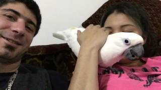 Download Get home and see my little cockatoo ❤️❤️❤️❤️ Video