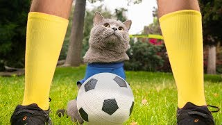 Download World Cup Cats Video