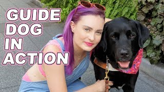 Download How Guide Dogs Guide A Blind Person Video
