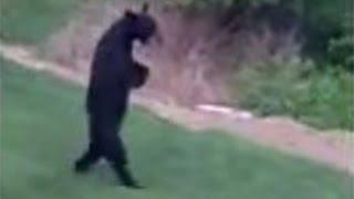 Download Hunter Files Defamation Suit in 'Walking' Bear Killing Video