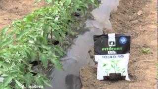 Download Saveti prilikom rasadjivanja biljaka u plastenike, Agromarket U nasem ataru 533 Video