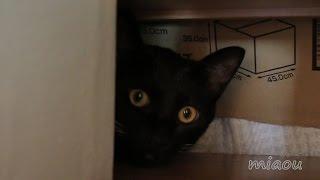 Download 真っ黒クロスケでておいで Relax black cat【瀬戸の黒猫日記】 Video